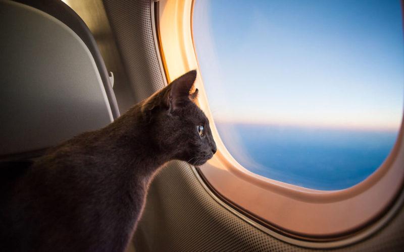 Į lėktuvą
